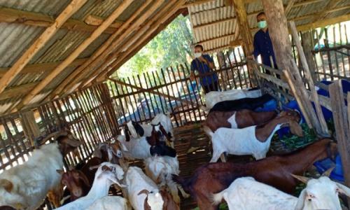 ติดตามงานโครงการส่งเสริมการเลี้ยงสัตว์และกิจการที่เกี่ยวเนื่อง อ.นาแห้ว