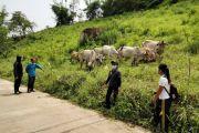 โครงการส่งเสริมการเลี้ยงสัตว์และกิจการที่เกี่ยวเนื่องฯ อ.นาแห้ว